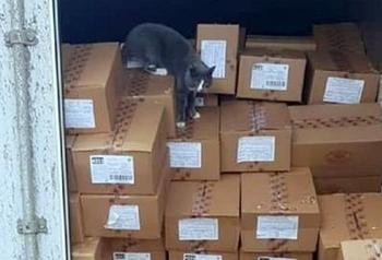 Украинский кот зайцем добрался до Израиля в контейнере с конфетами